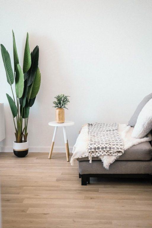 feature-plants-in-bedrooms